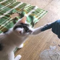 2.A veterinārmedicīnas kursa labie darbi dzīvnieku patversmē